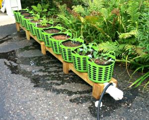 Hybrid Rain Gutter Grow System; peppers; hydroponics; Larry Hall; Grow Bag Garden System