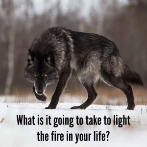 Light the fire in your life; meme; training; weights; weight lifting; mindset; warrior; wolves