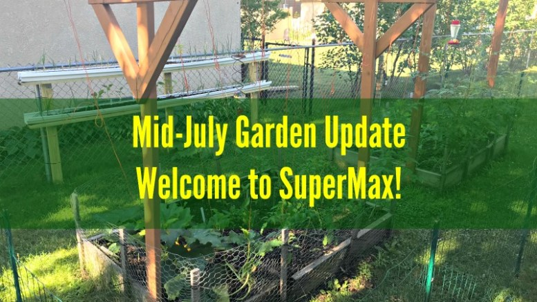 Mid-July Garden Update - Welcome to SuperMax - Small Scale Life