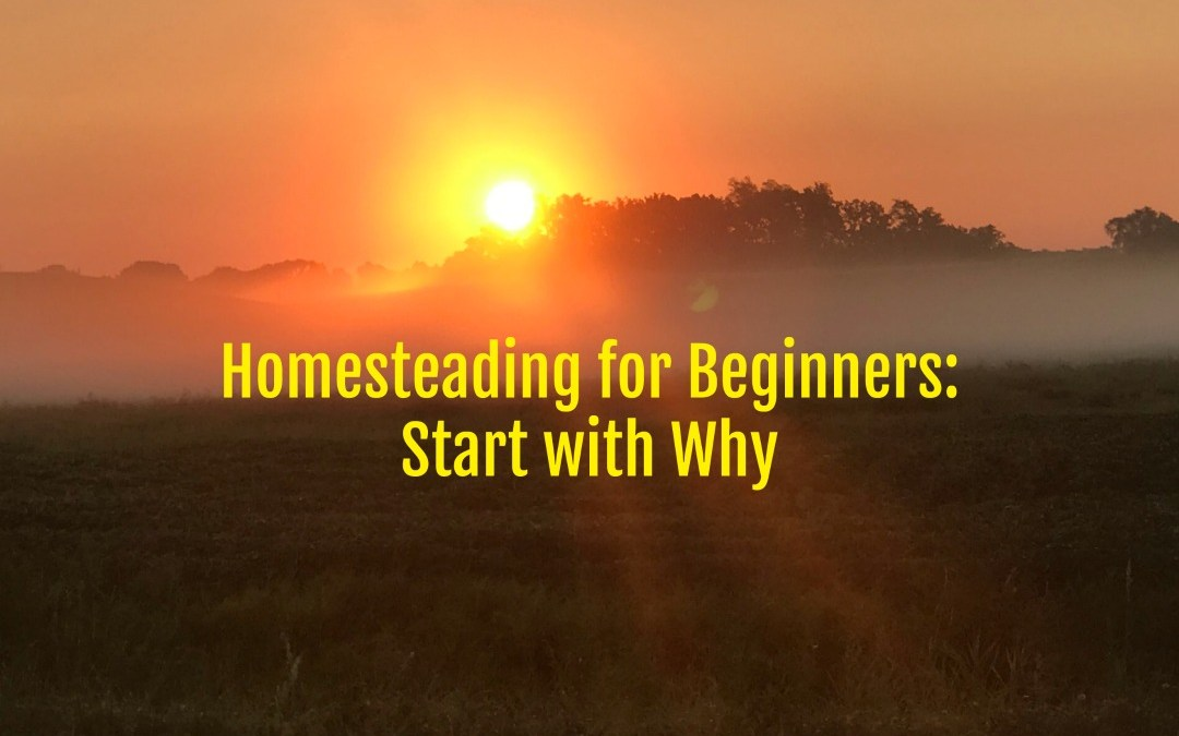 Homesteading for Beginners, Homestead, Urban Homestead, fruit trees, edible landscape, Sustainable Life, Rural Living, Rural Life, Frugal Living, reduce debt, living simple, simple life, simple living, tribe, community, tradition, mentors, Small Scale Life Podcast