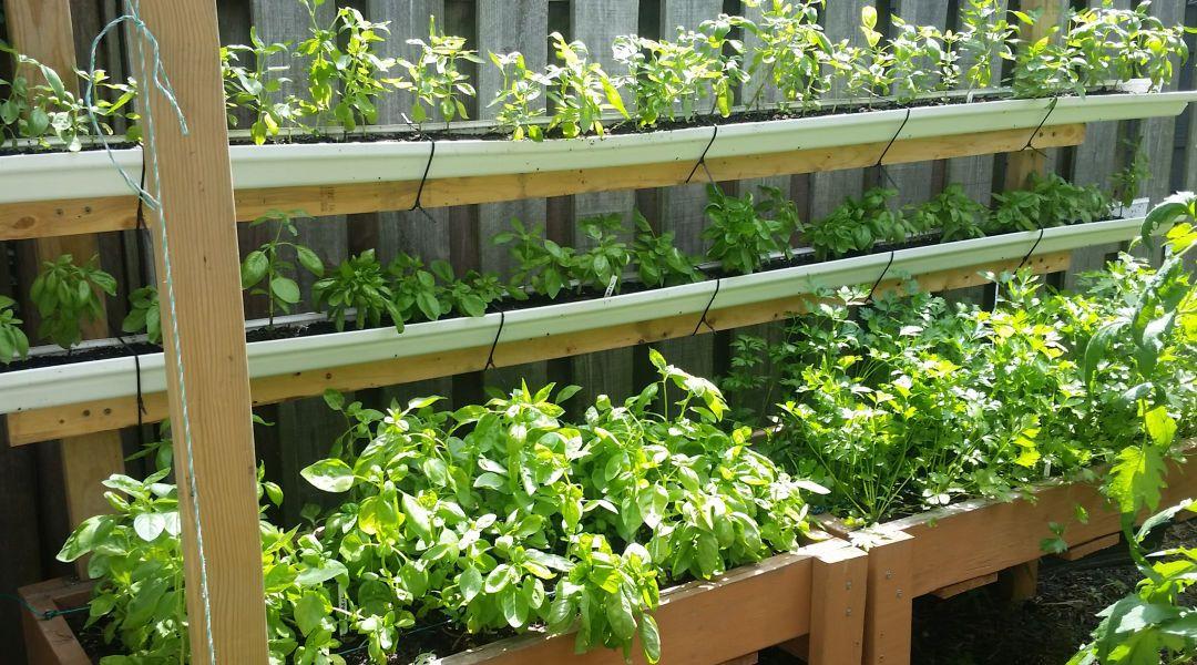 Vertical Garden; Small Scale Life Newsletter