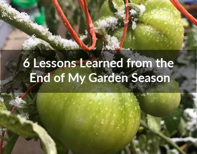 6 Lessons Learned from the End of My Garden Season;; gardening; frost