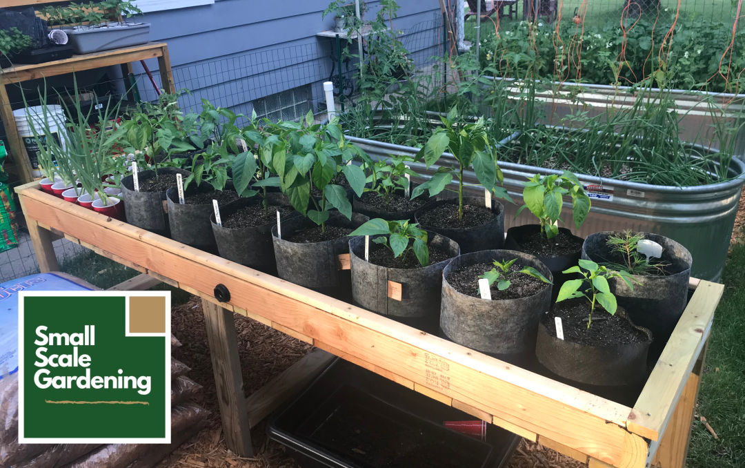 Small Scale Gardening