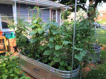 How to Extend my Garden Season, Wicking Bed 2
