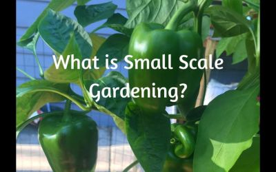 What is Small Scale Gardening?