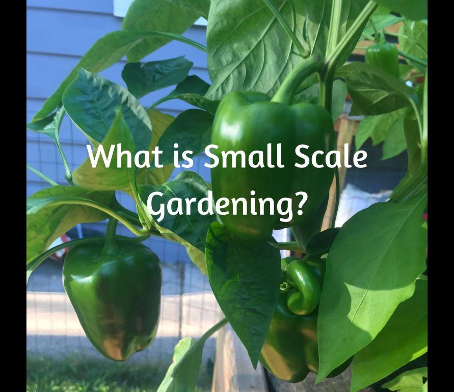 Small scale Gardening, Gardening