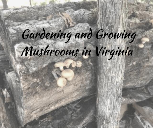 SSG: Gardening and Growing Mushrooms in Virginia