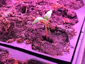 Free Seed Starting Guide, Gardening