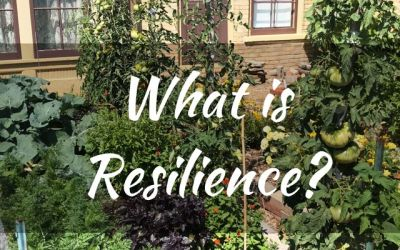 What is Resilience?
