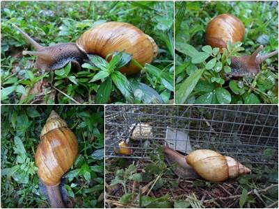 Image result for snail farming in nigeria