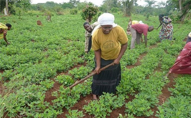 1.1.5 Exciting reasons to consider African agribusiness 5