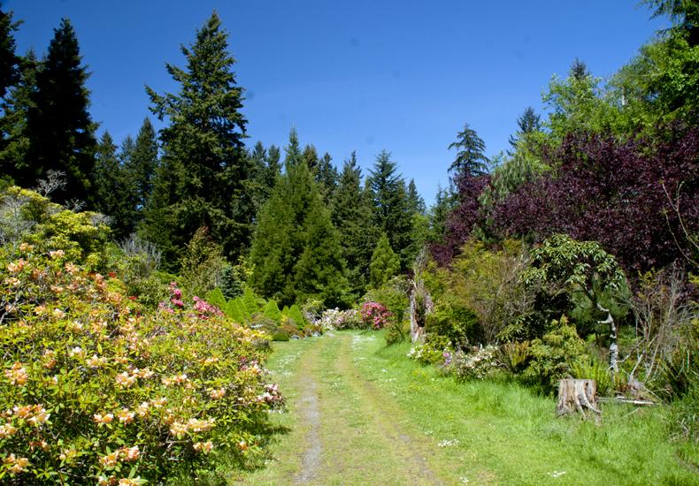 Meerkerk Gardens – A Peaceful Woodland Garden |