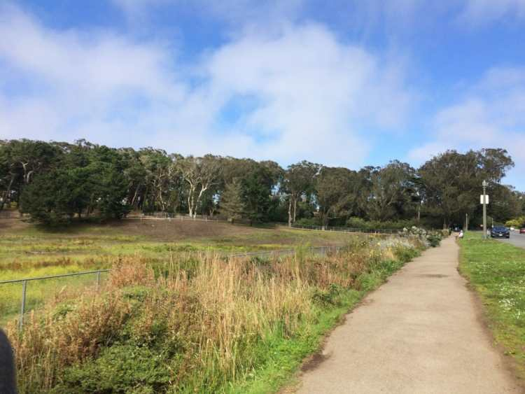 golden gate park tours