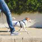 A person walks a dog.