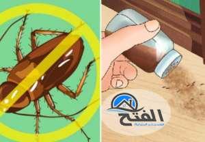 شركة مكافحة النمل الابيض بعجمان