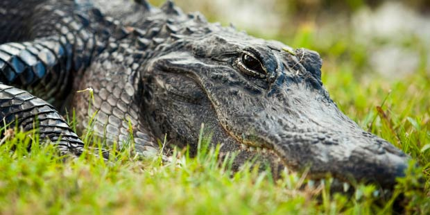 Gray Line Everglades Tour 1