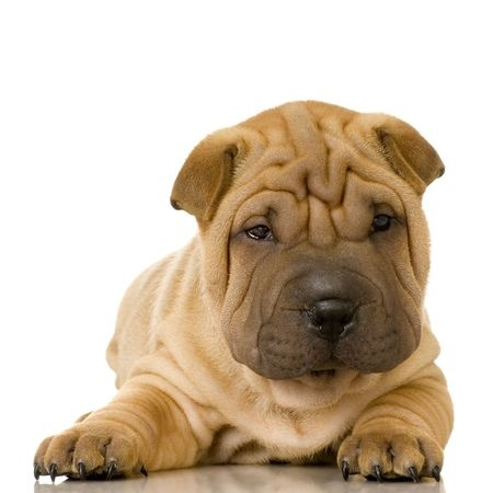 Male Dog Names | The Smart Dog Guide