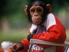 kalu the millionaire chimp