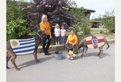 Miniature donkeys Alistair and Derek Animals That Can Predict FIFA Winning Team