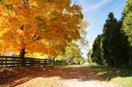 Appalachian Fall Foliage Tour, Ohio
