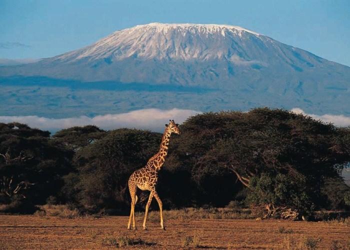 Daily Daydream: Mount Kilimanjaro, Tanzania, Africa