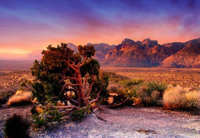 Daily Daydream: Natural Beauty Just Beyond Las Vegas