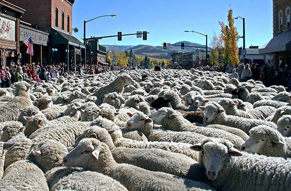Trailing of the Sheep Festival