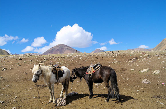 Ride the Mongol Horse Trail