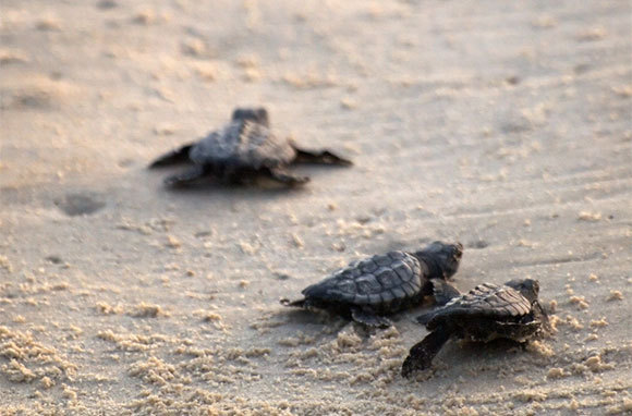Padre Island's Little Shell And Big Shell Beaches, Texas