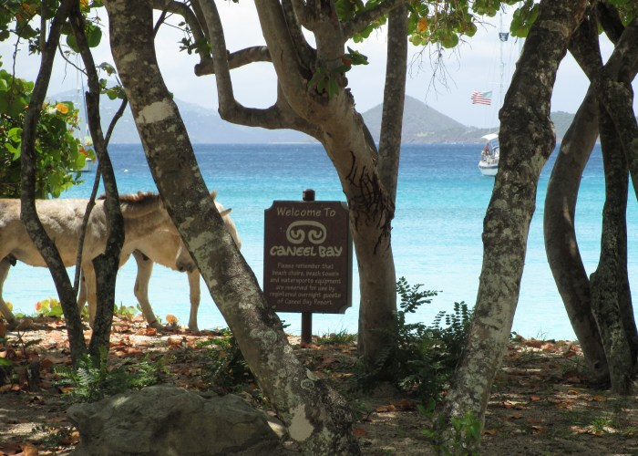 Rediscovering the Old Caribbean, Naturally