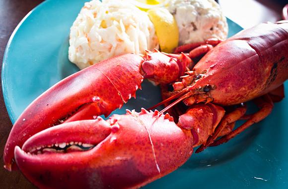 Nova Scotia's Lobster