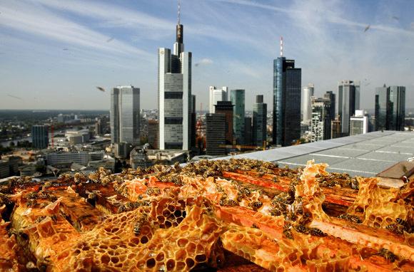 Jumeirah Frankfurt, Frankfurt