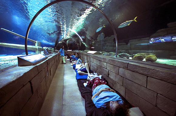 Spend a Night Under the Sea