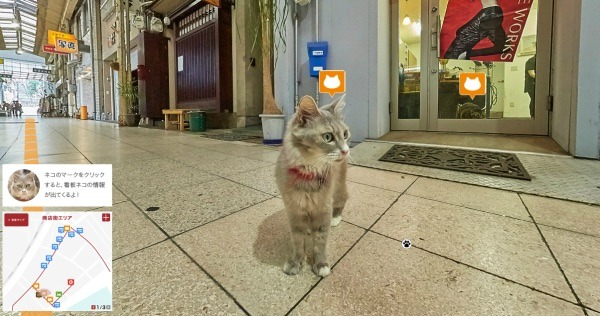 Cat's Eye View: Looking at Japan From a Different Angle