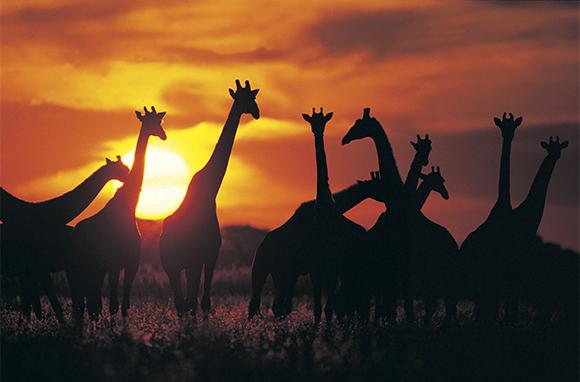For the Adventurers: Botswana