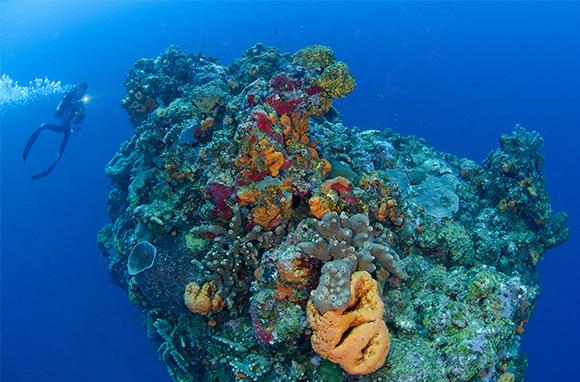 Underwater Lava Pinnacles, Saba