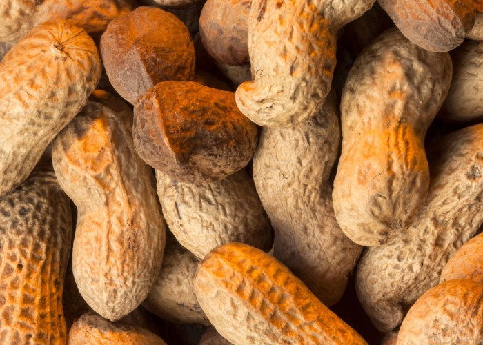 Is It OK to Bring Peanuts on a Plane?