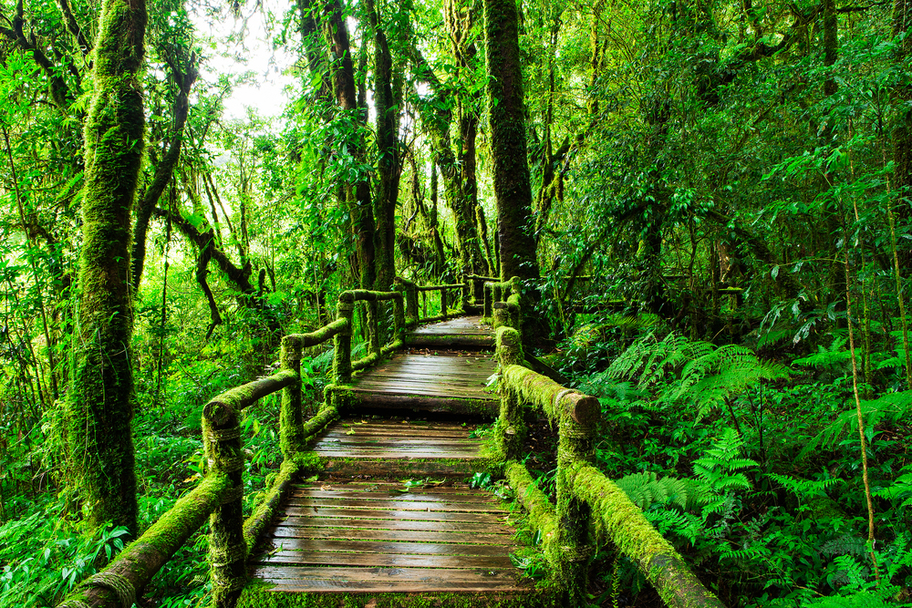 walkway in doi inthanon national park