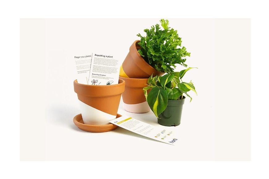Horti plant box.
