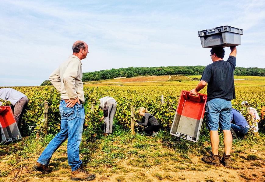vineyard in beaune france