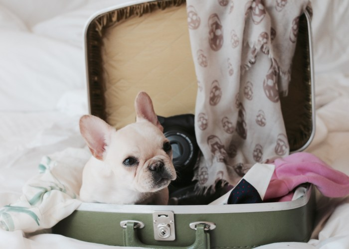 dog sitting in a packed suitcase