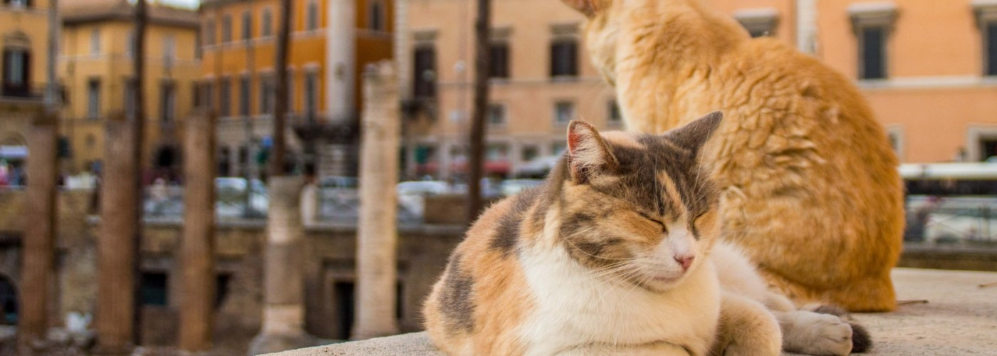 cats lounging at the Rome cat sanctuary