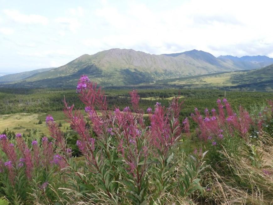 Flattop mountain, anchorage alaska.