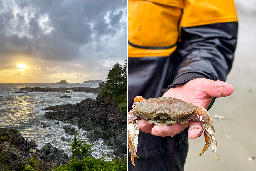 sunset and person holds a crab in tofino, british columbia, canada