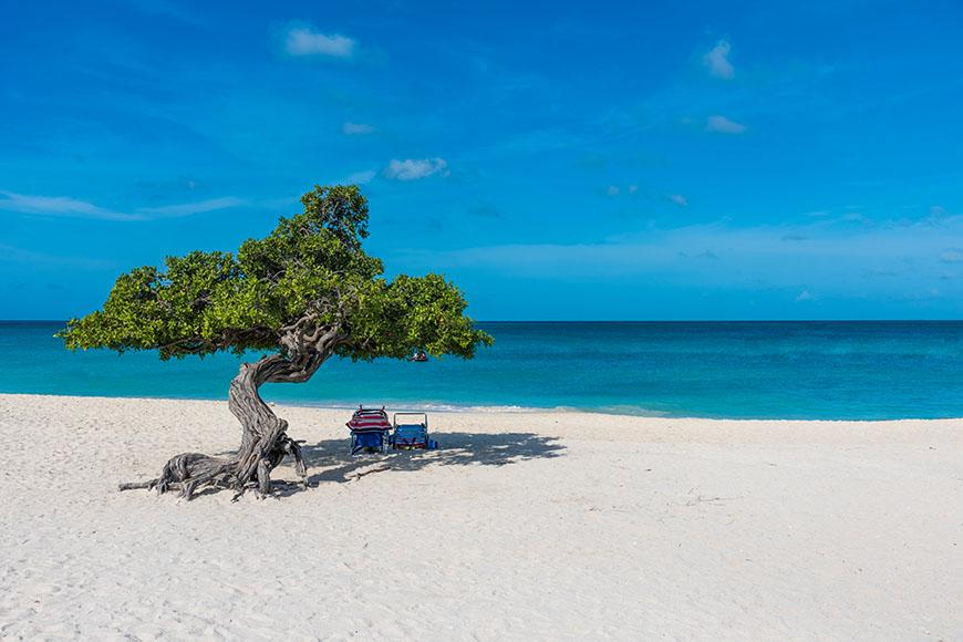 divi divi tree on eagle beach aruba.