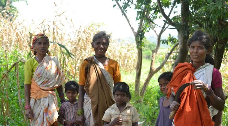'Forgotten' Kodo-Kutki millets on a comeback trail in this MP tribal belt
