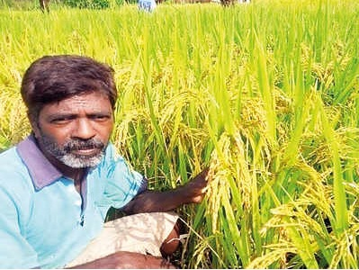 Research identifying crops resilient to climate change