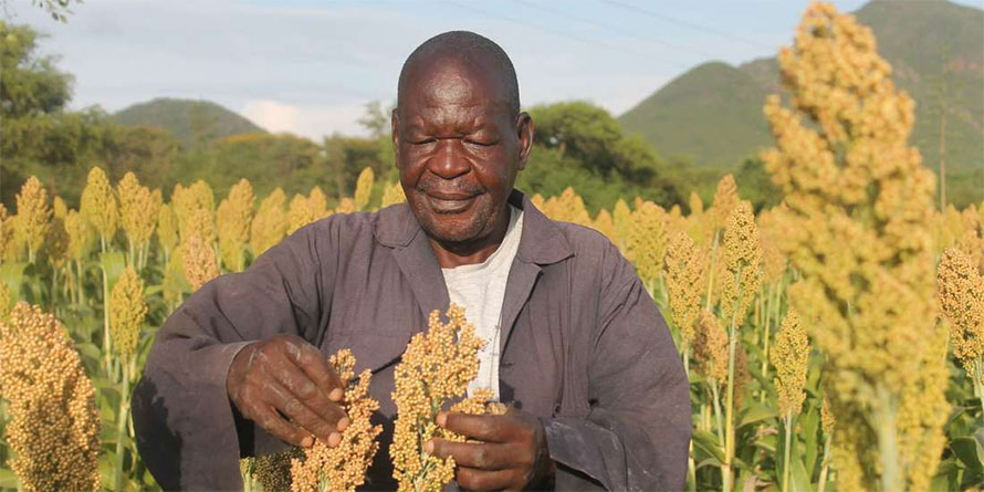 Incoherent policies draw back gains in smallholder farming