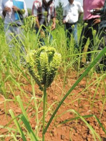 Making India Kuposhan Mukta through Biofortified Crop Varieties