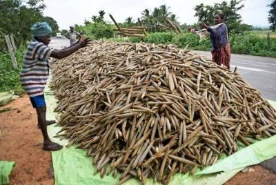 NITI Aayog hails millet revival in Odisha